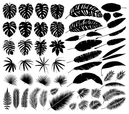 Illustration pour Vector set of silhouettes of tropical leaves, botanical isolated elements - image libre de droit