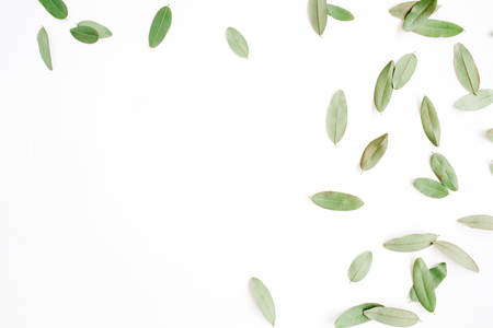 Photo for frame with green petals isolated on white background. flat lay, top view - Royalty Free Image