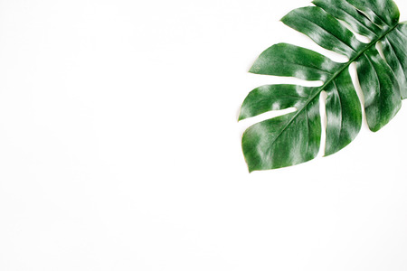 Photo for Tropical palm leaf. Flat lay, top view - Royalty Free Image