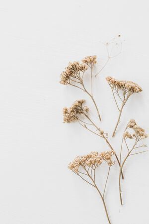Photo pour Dry floral branch on white background. Flat lay, top view minimal neutral flower composition. - image libre de droit