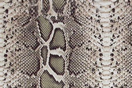 Foto de Snake Skin - Imagen libre de derechos