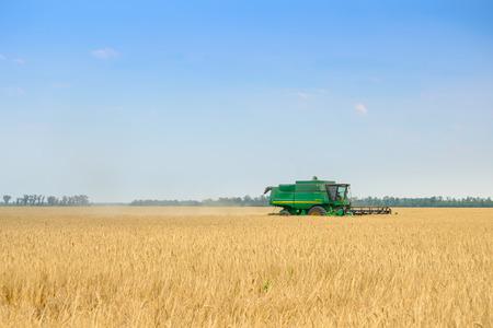 Foto für Combine Harvester Harvesting Wheat in the Field. - Lizenzfreies Bild