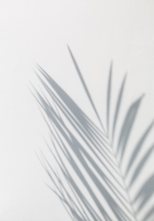 Photo pour shadow of palm leaves - image libre de droit