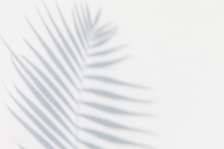 Foto de shadow of palm leaves - Imagen libre de derechos