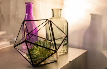 Foto de plant in the terrarium - Imagen libre de derechos