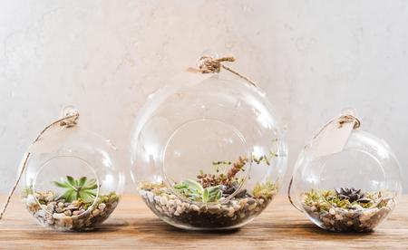 Foto de mini succulent garden in glass terrarium - Imagen libre de derechos
