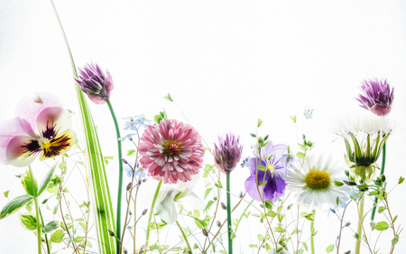 Photo for spring flowers - Royalty Free Image