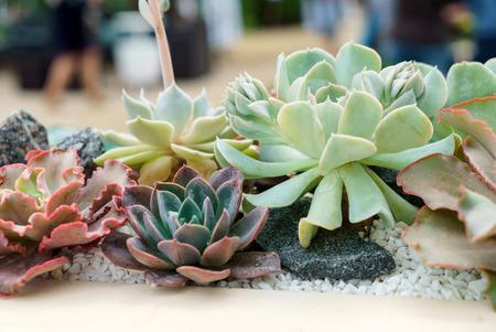 Foto de succulent plants - Imagen libre de derechos