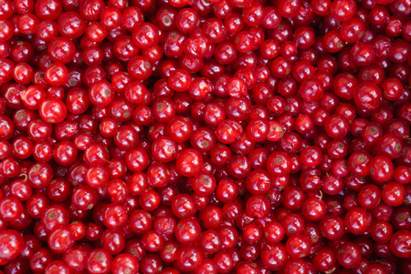Photo for red currant - Royalty Free Image