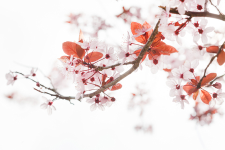 Photo pour spring tree - image libre de droit