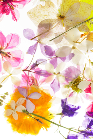 Photo for colorful dry flowers - Royalty Free Image