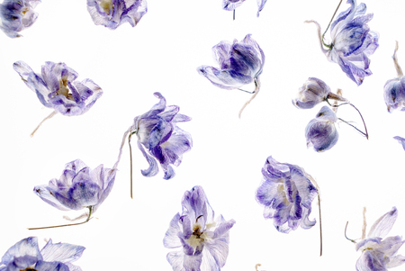 Photo for dry flowes on the white - Royalty Free Image