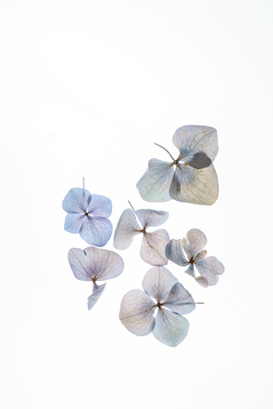 Photo pour floral composition - image libre de droit