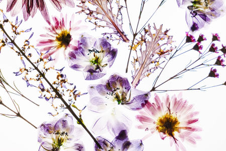 Photo for dry flowers on the white background - Royalty Free Image