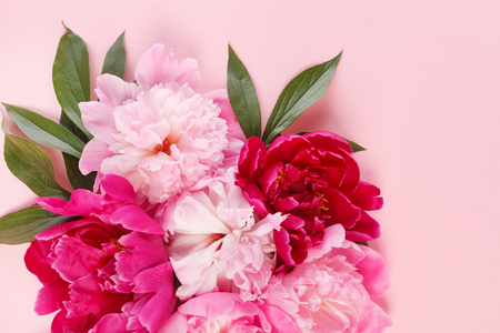 Photo for nice peonies on pink background - Royalty Free Image