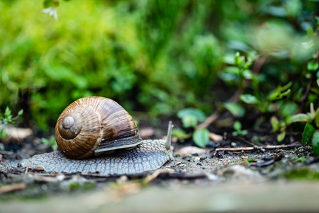 Photo pour snail in the garden - image libre de droit