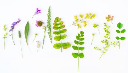 Photo pour nature composition - image libre de droit