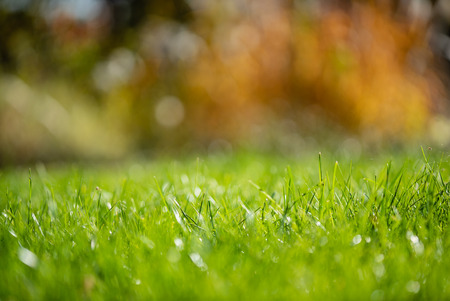 Photo for Bright spring grass field with sunlight bokeh background - Royalty Free Image