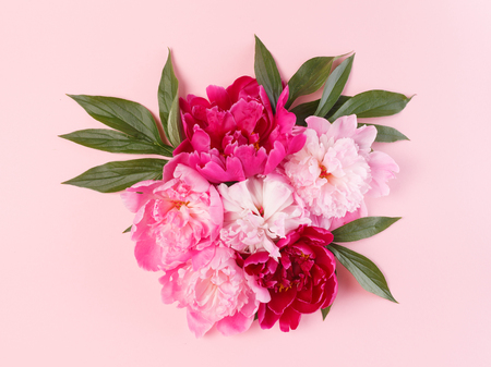 Photo for Nice peonies on the pink - Royalty Free Image