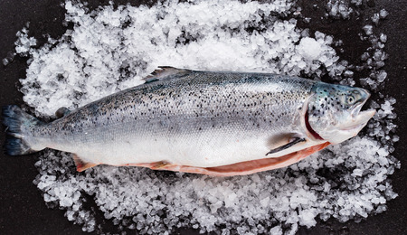 Photo for raw salmon fish on the ice - Royalty Free Image