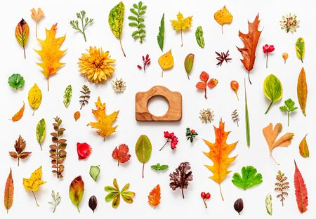 Photo for Autumn Flat Lay on the White - Royalty Free Image