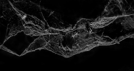 Photo for Abstract Cobweb on black background - Royalty Free Image
