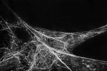 Photo for Abstract Spider web cobweb on black background - Royalty Free Image