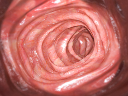 Foto de Colonoscopy. Inside of healthy colon, large intestine. - Imagen libre de derechos