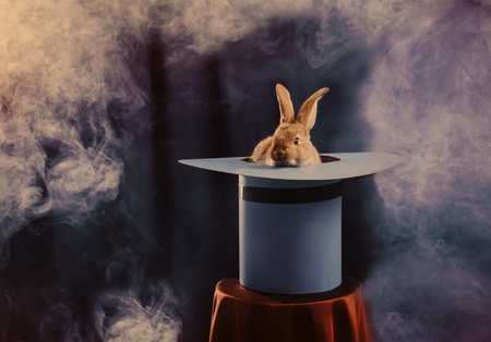 Foto de rabbit in  hat on blue background - Imagen libre de derechos