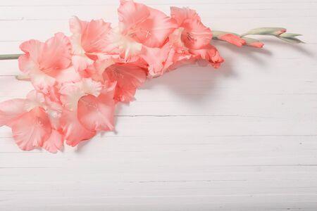 Photo pour Gladioli on white wooden background - image libre de droit