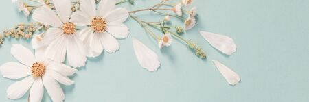 Photo for white flowers on green paper background - Royalty Free Image