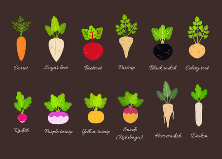 Ilustración de Collection of different root vegetables with titles. Vector illustration in flat style - Imagen libre de derechos
