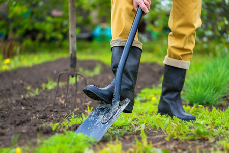 Foto de A farmer is digging soil with a shovel at spring green outdoors background. - Imagen libre de derechos