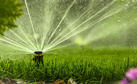 Foto de automatic sprinkler system watering the lawn on a background of green grass - Imagen libre de derechos