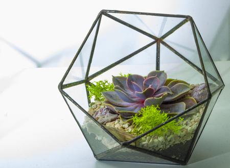 Foto de Green succulent in a glass pot in scandinavian style. - Imagen libre de derechos