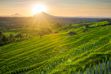 Photo for Beautiful sunrise over the Jatiluwih Rice Terraces in Bali, Indonesia - Royalty Free Image