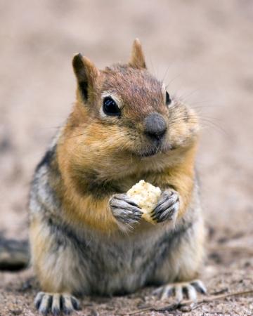 Photo pour squirrel - image libre de droit