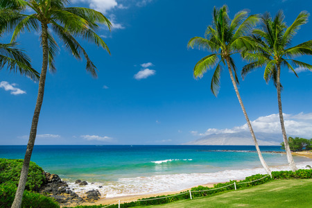 Photo for Tropical beach with palm trees - Royalty Free Image