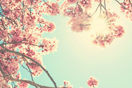 Photo for Spring blossom - Royalty Free Image