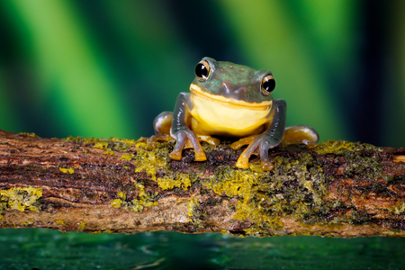 Photo pour Smile! a little frog smiling at the camera - image libre de droit