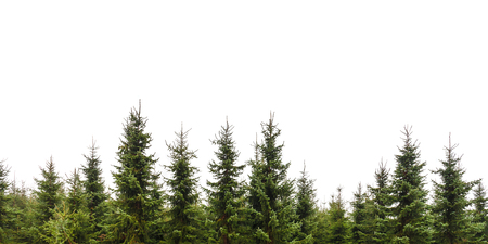 Foto de Row of Christmas pine trees isolated on a white background - Imagen libre de derechos