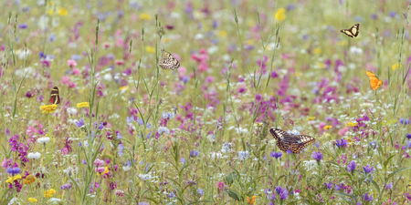 Photo pour Field with colorful blooming wild spring flowers and butterflies - image libre de droit
