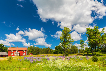 Photo pour Typical swedish farmhouse in spring with a garden filled with blooming digitalis - image libre de droit