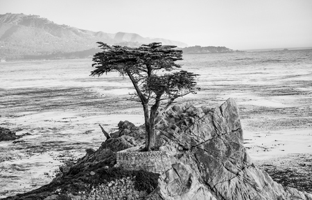 Foto de MONTEREY, USA - JUL 26, 2008: The Lone Cypress Tree in Pebble Beach, California in Monterey, USA.  The Cypress tree, which is around 250 years old, is one of the most characteristic landmarks of California. - Imagen libre de derechos