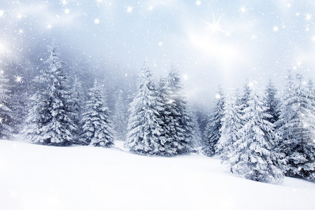 Photo pour Christmas background with snowy fir trees - image libre de droit