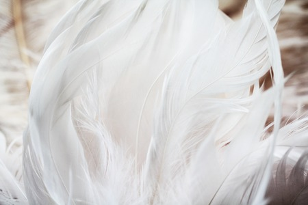 Photo for White feathers background - Royalty Free Image