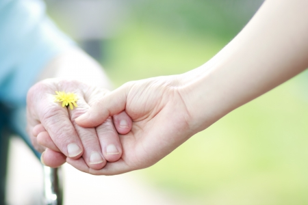 Photo for Young and senior hands holding their hands with a yellow dandelion - Royalty Free Image