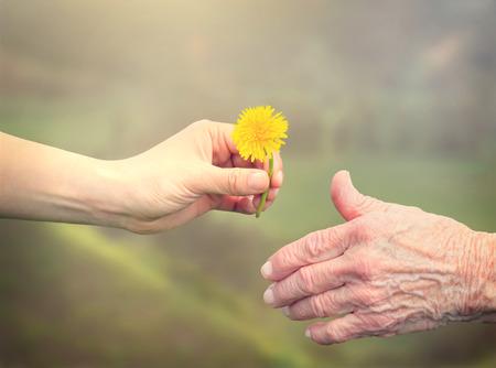 Foto de Young woman giving a dandelion to senior woman - Imagen libre de derechos