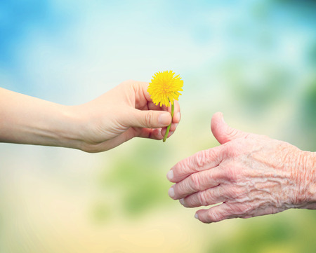 Photo pour Senior woman sharing a flower with an elderly woman - image libre de droit