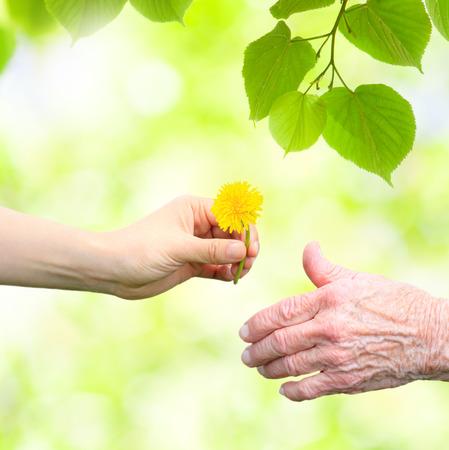 Foto de Young woman giving a dandelion to senior woman with green tree leaves - Imagen libre de derechos